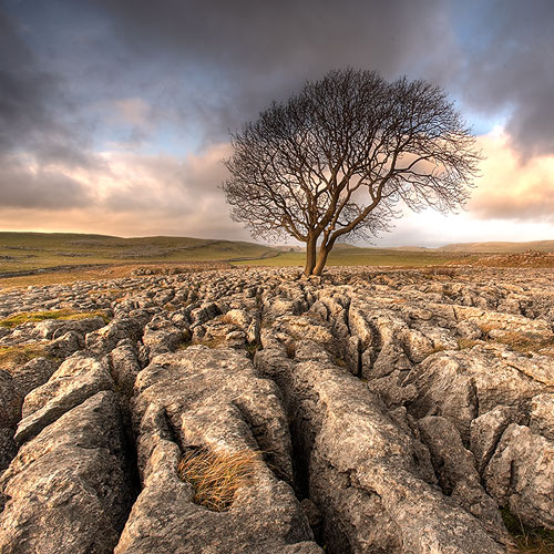 Just a Tree - Landscapes