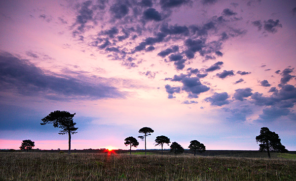 New Sky, New Morning - Dorset and Hampshire