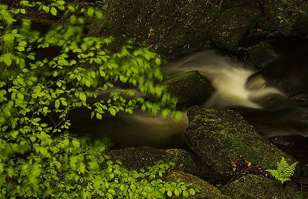 Padley Gorge - Landscapes