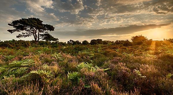 BRATLEY SUNRISE - Dorset and Hampshire