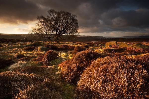 Ancient Land - Landscapes