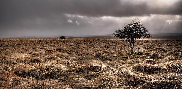 Big Moor - Landscapes