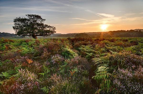 OVER STONARD - Dorset and Hampshire