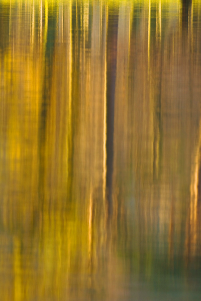 Tree Reflections - Abstract