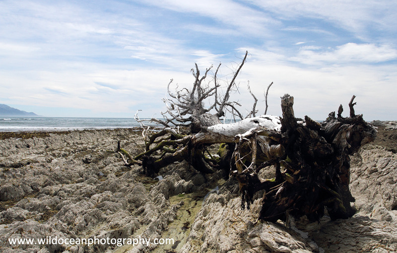 NZ007: Dead Tree - New Zealand (Wellington & South Island)