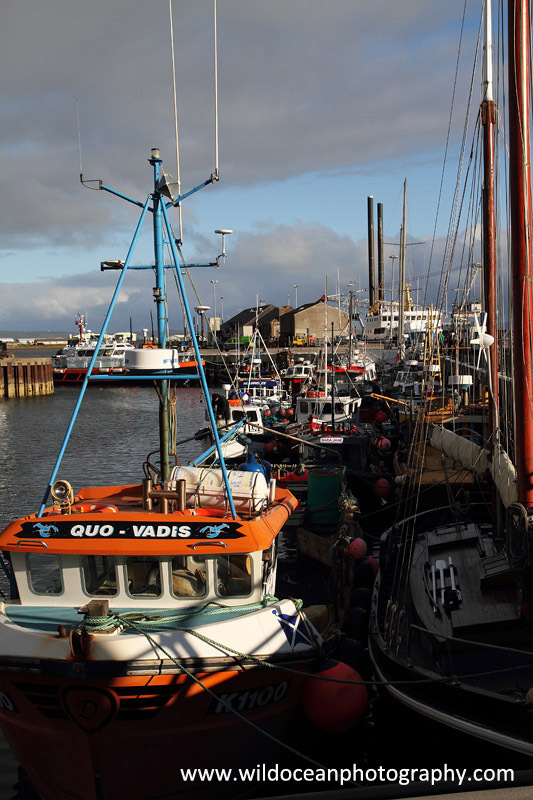 HCF012: Kirkwall harbour - Creel (Trap) Fisheries