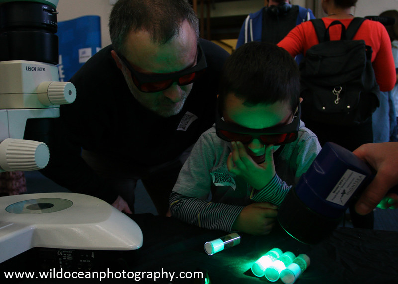 GSFSS-009: Fluorescence - Weekend Events (GSF)