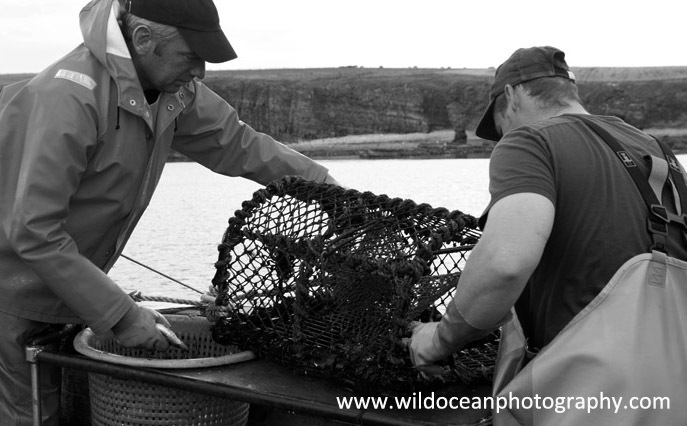 HCF016: Working the pots - Creel (Trap) Fisheries