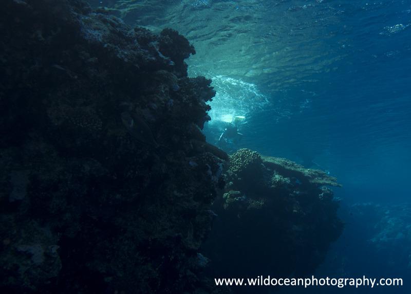 RS014: Snorkelling in Ras Muhammad - Red Sea / Sinai Peninsula