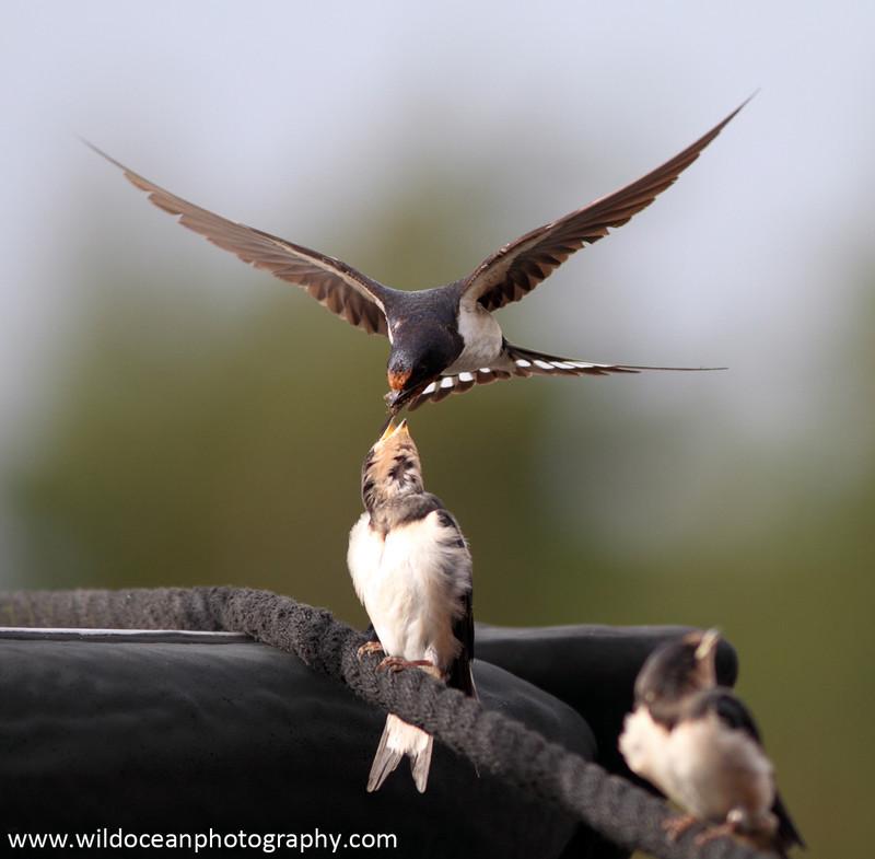 SWE002: Feeding Time 4 - Sweden (Kosterhavet National Park)