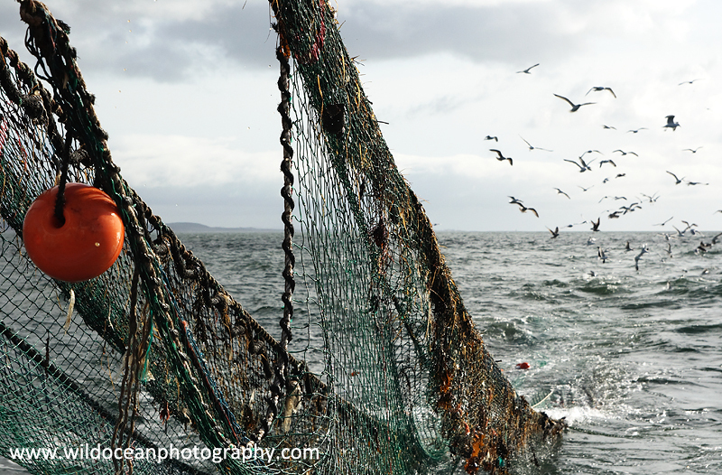 HTF010: Hauling nets - Trawl Fisheries