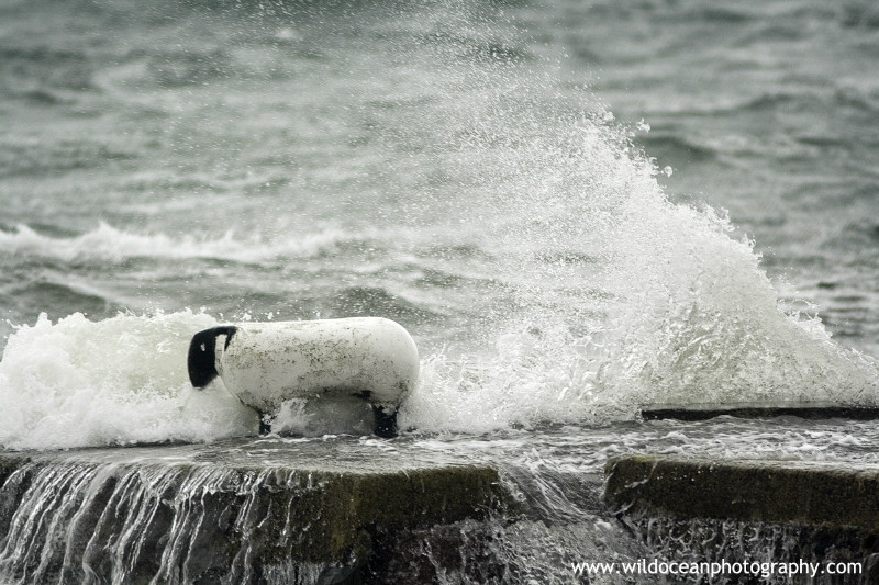 SCE009: Sheep in a Storm - Seascapes