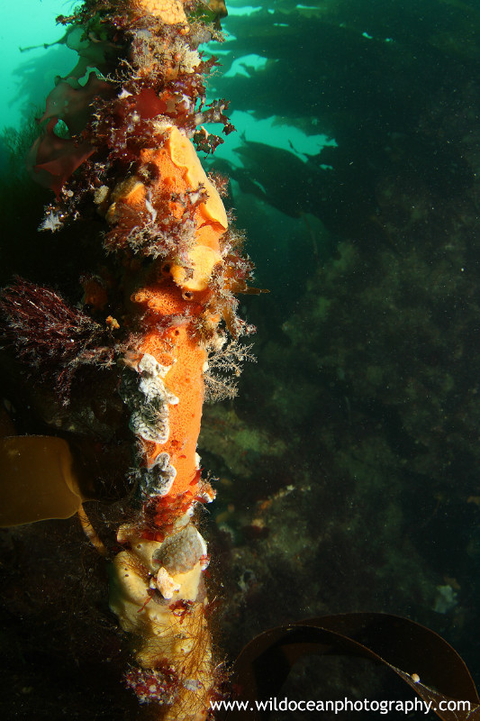 UML002: World on a kelp stem - Marine Life