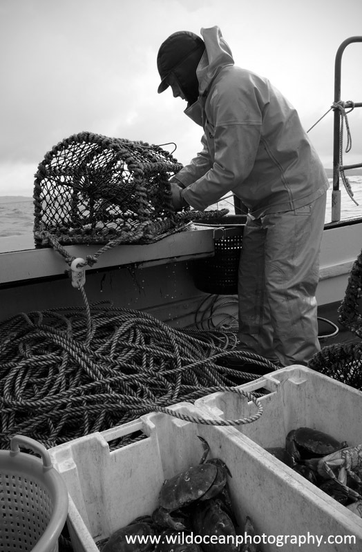HCF017: Working the pots - Creel (Trap) Fisheries