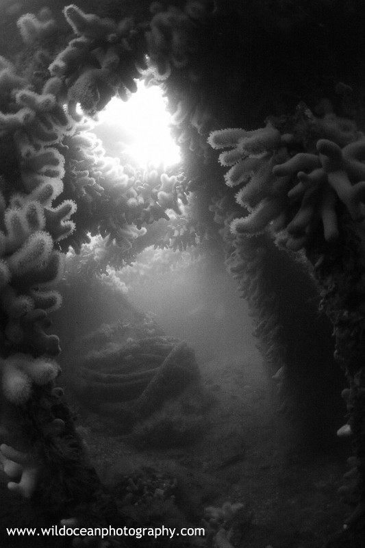 USW012: Endeavour BW - Shipwrecks and Divers