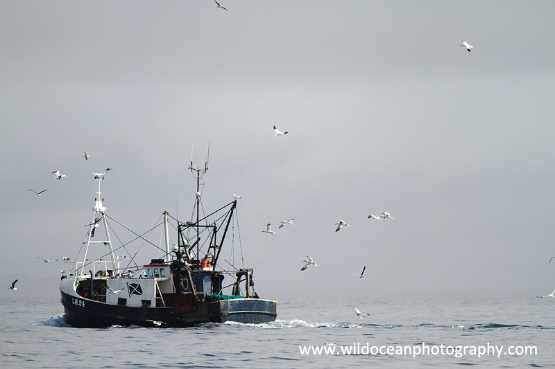 HTF005: Returning trawler - Trawl Fisheries