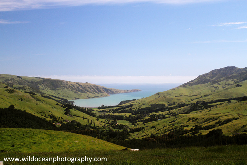 NZ002: Akaroa view - New Zealand (Wellington & South Island)