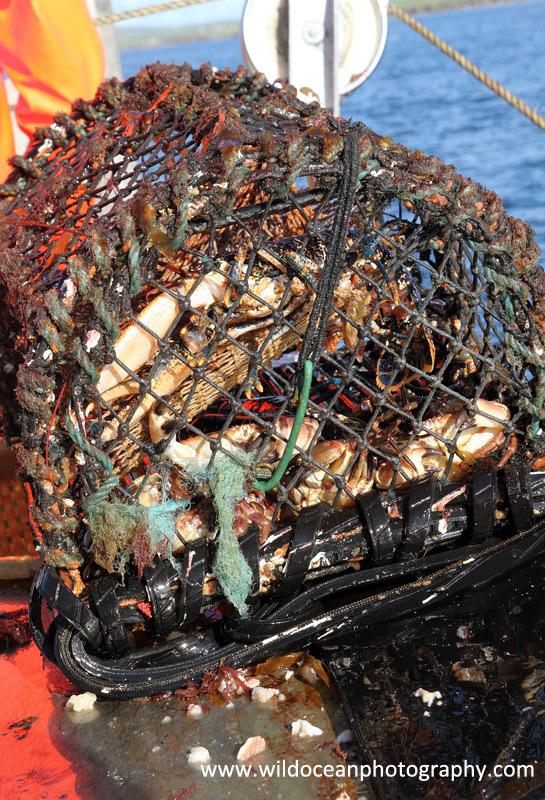 HCF009: Creel catch - Creel (Trap) Fisheries