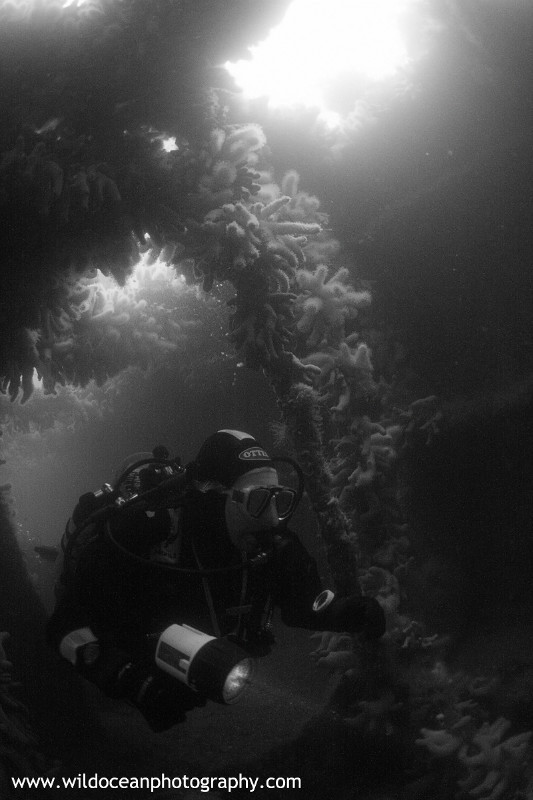 USW003: Endeavour BW - Shipwrecks and Divers