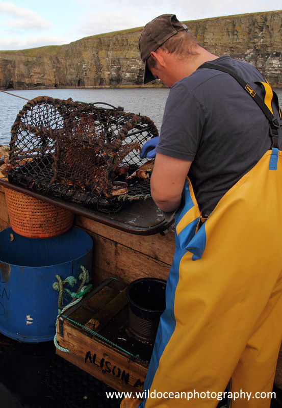 HCF013: Working the pots - Creel (Trap) Fisheries