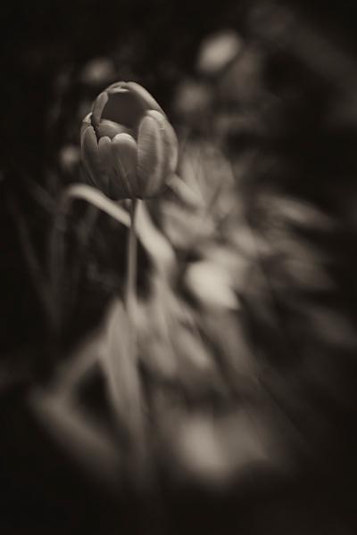 Macro Lensbaby photograph