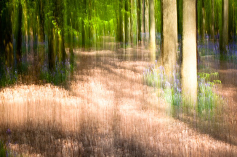 Ashridge Blur - Landscape