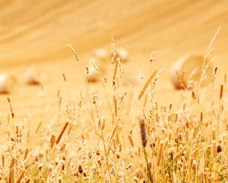 End of Summer - Landscape