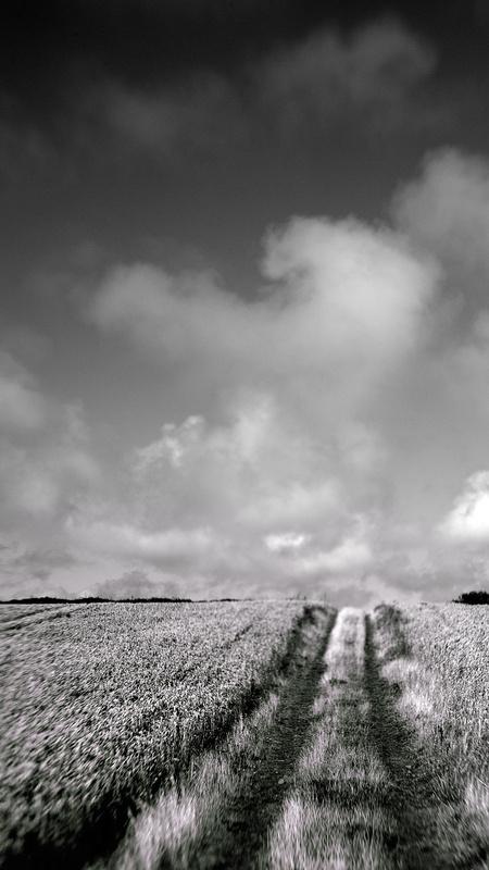 The Corn Field - Monochromatic