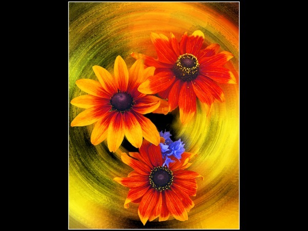Flowers - John Kaperys