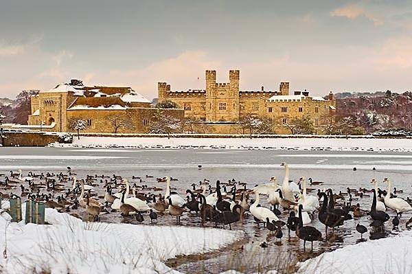 Leeds Castle and frozen lake - Landscapes