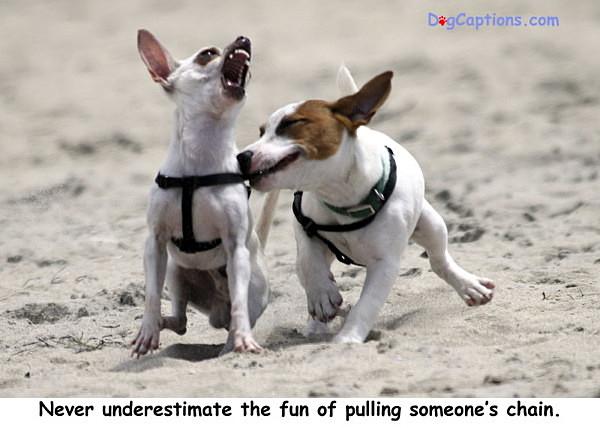 - Terriers