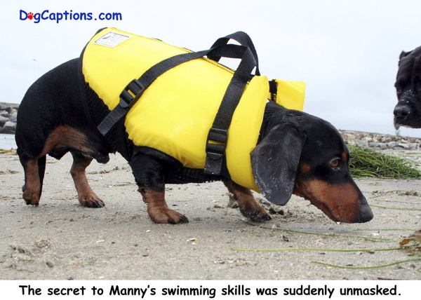 - Gallery of our DogCaption Cards