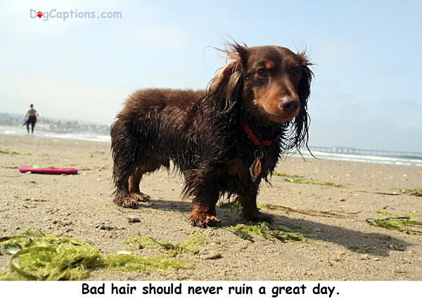- Dachshunds