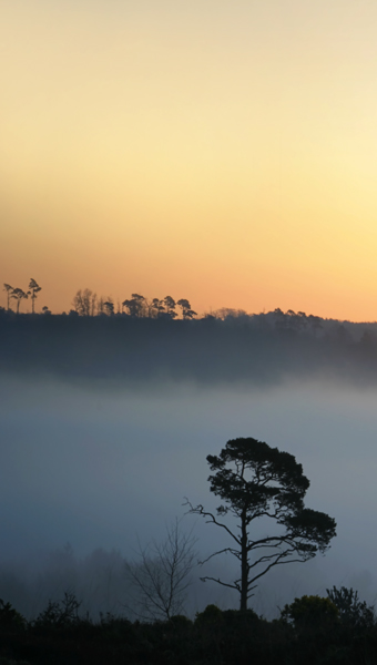 All Alone - Ashdown Forest
