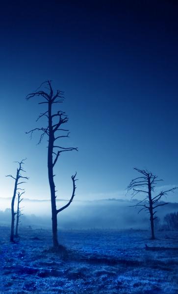 Lifeless - Ashdown Forest