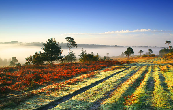Forest Fog - Ashdown Forest
