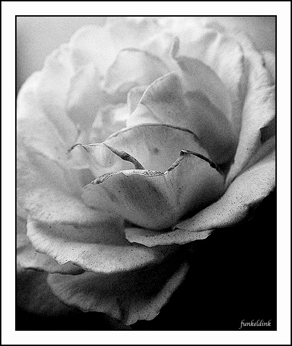 - Funky Flowers ...
