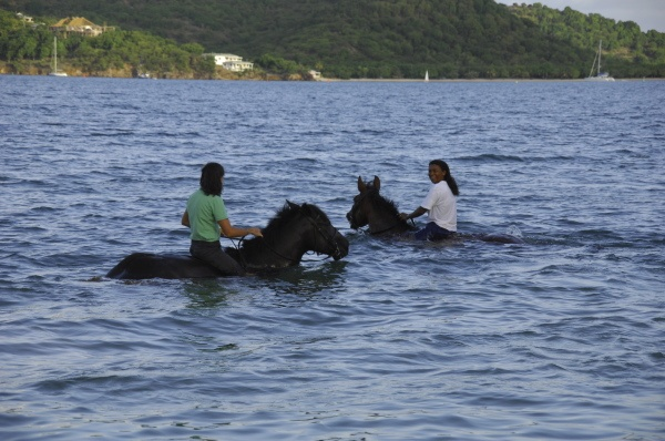 - Swim on Horseback