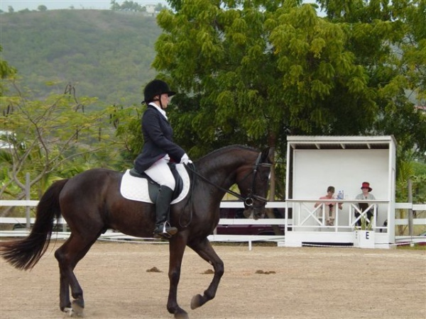 - Show Jumping
