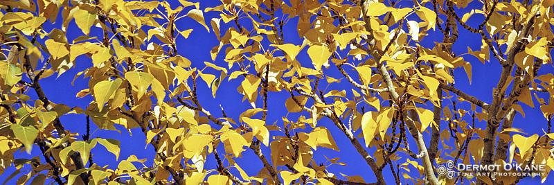 Autumn - Panoramic Horizontal Images