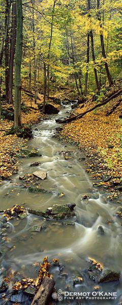 Tiffany Creek - Panoramic Vertical Images