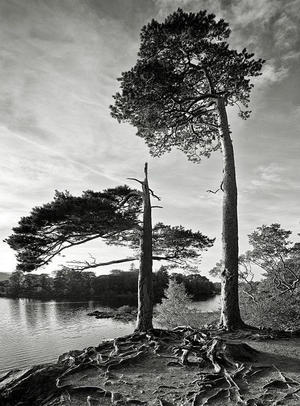 - Landscape in Monochrome