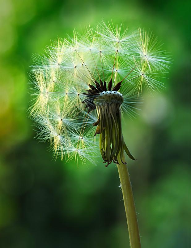 - Last Chance to See - Wild British Flora
