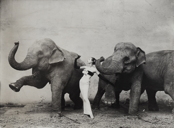 Richard Avedon - Archive