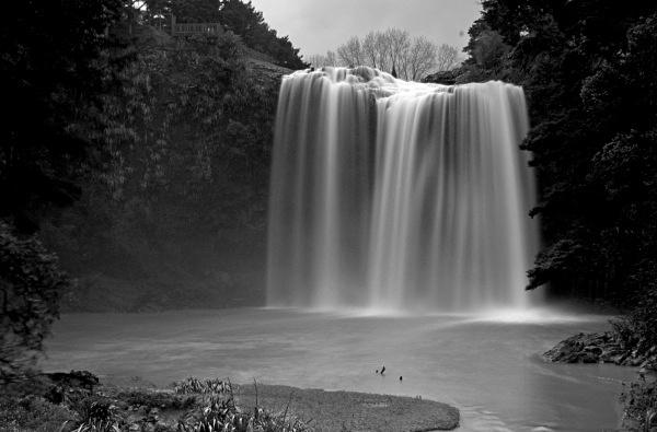 Whangarei falls - New Zealand North Island