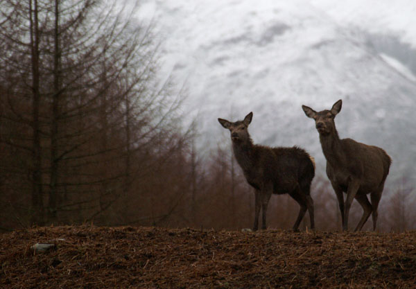 Curiosity - Wildlife photography