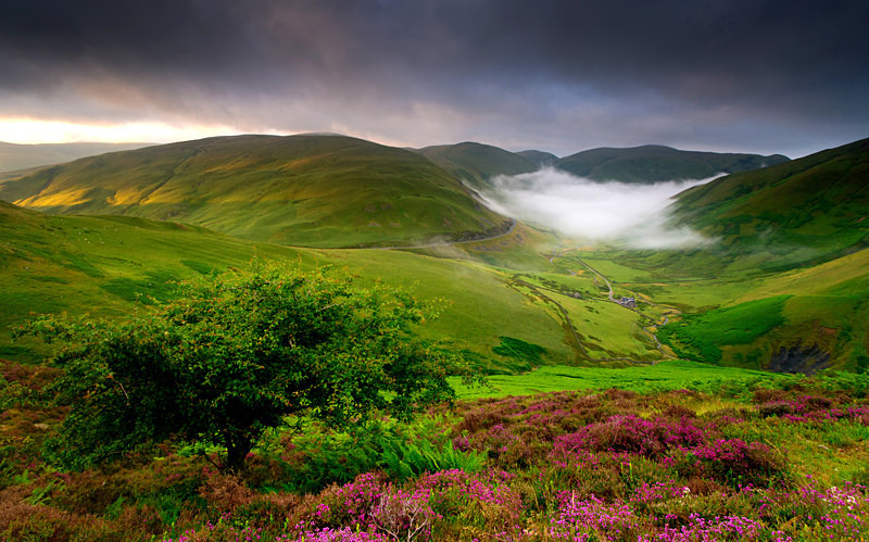 Heather and Hills - Dumfries and Galloway
