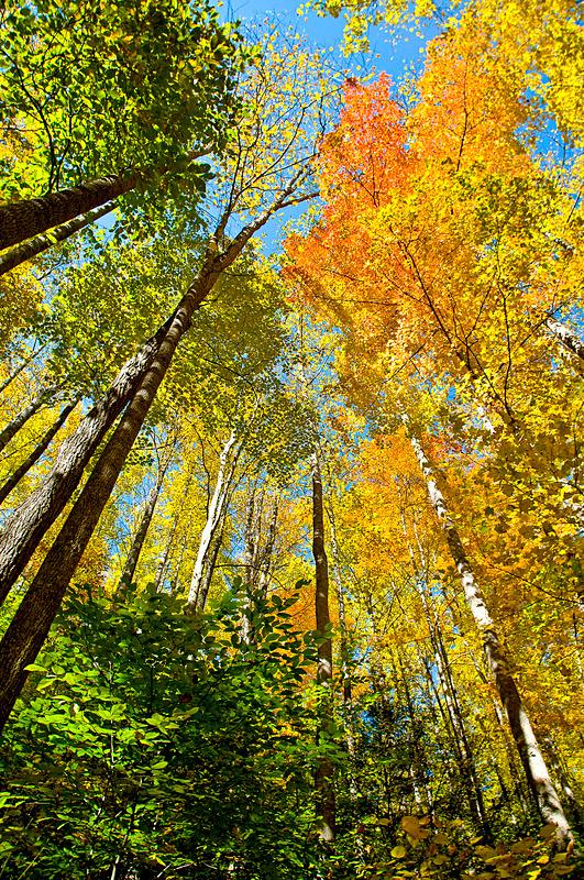 Big Creek Trees - Mountains