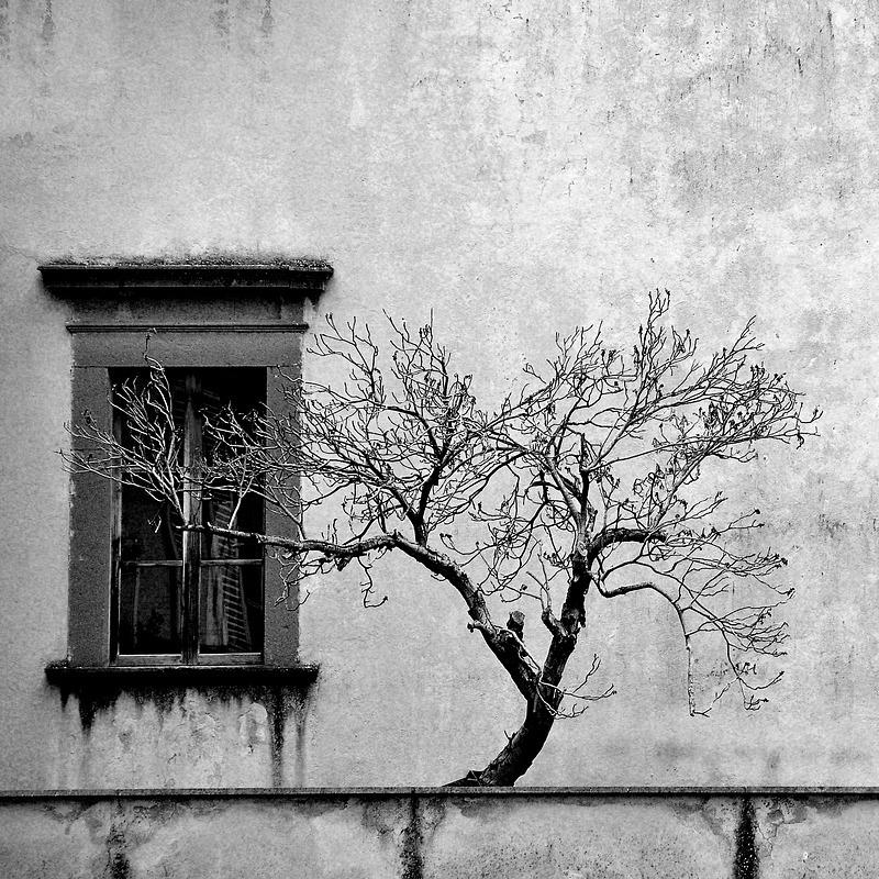 Orvieto Tree No.2 - Travel - Black & White