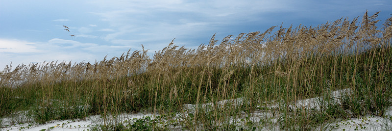 Sea Oats Panorama No.1 - Panoramas